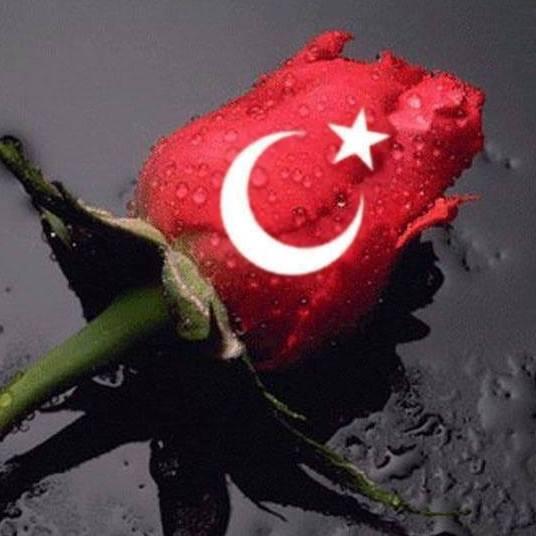 Türk bayrağı gül