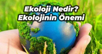 ekoloji nedir
