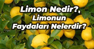 limon nedir faydaları