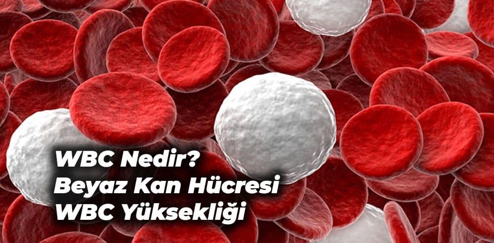 beyaz kan hücresi